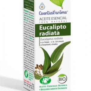 eucalipto radiata1